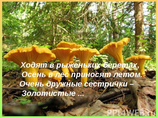 Ходят в рыженьких беретах,Осень в лес приносят летом.Очень дружные сестрички –Золотистые ...