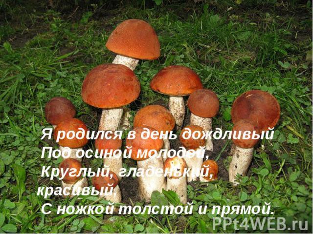Я родился в день дождливыйПод осиной молодой,Круглый, гладенький, красивый,С ножкой толстой и прямой.