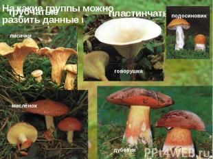 На какие группы можно разбить данные грибы