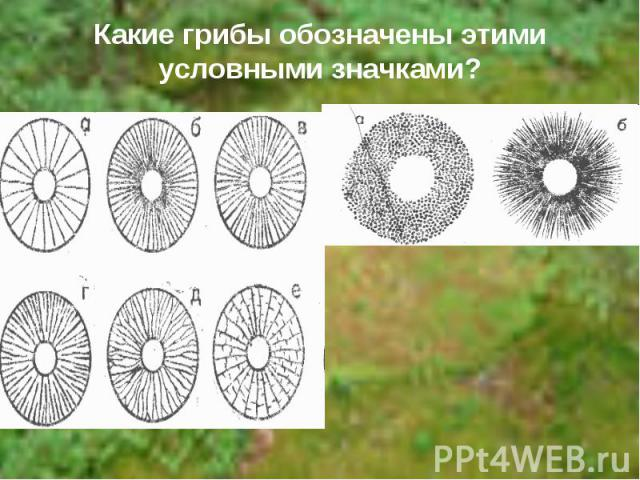 Какие грибы обозначены этими условными значками?
