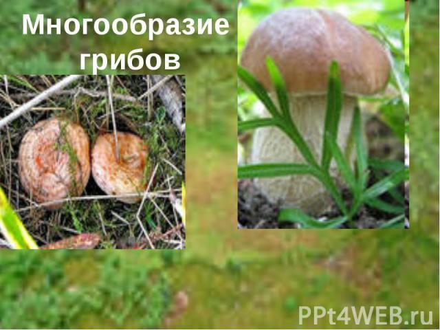 Многообразие грибов