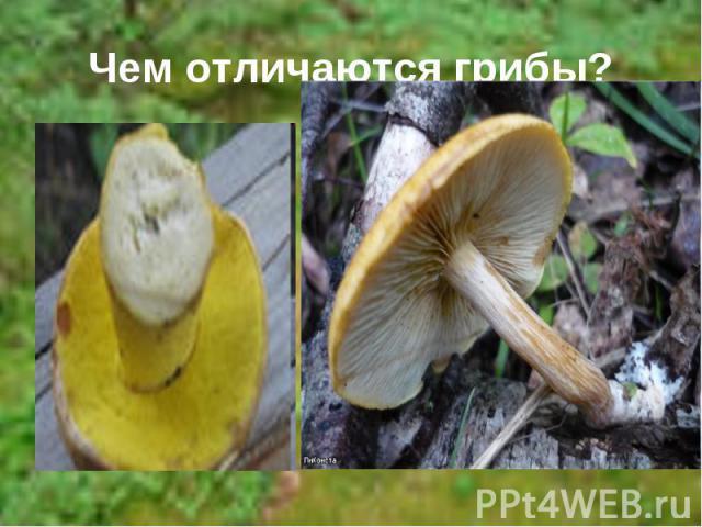Чем отличаются грибы?
