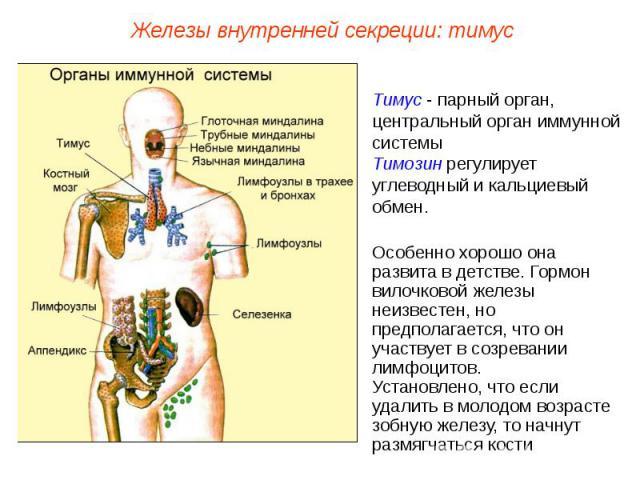 Железы внутренней секреции: тимусТимус - парный орган, центральный орган иммунной системыТимозин регулирует углеводный и кальциевый обмен.Особенно хорошо она развита в детстве. Гормон вилочковой железы неизвестен, но предполагается, что он участвует…
