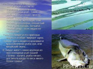Река Амур не сравнима ни с одной рекой России по видовому разнообразию пресновод