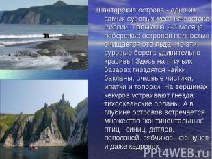 Шантарские острова - одно из самых суровых мест на востоке России. Только на 2-3