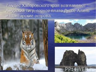 7 чудес Хабаровского края возглавляют Амурский тигр, горное плато Дуссе-Алинь и