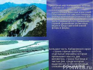 Природный мир Хабаровского края не сравним ни с одним регионом нашего государств