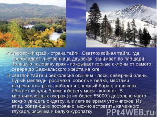 Хабаровский край - страна тайги. Светлохвойная тайга, где преобладает лиственниц
