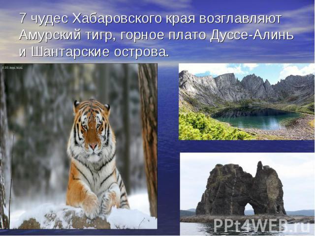 7 чудес Хабаровского края возглавляют Амурский тигр, горное плато Дуссе-Алинь и Шантарские острова.
