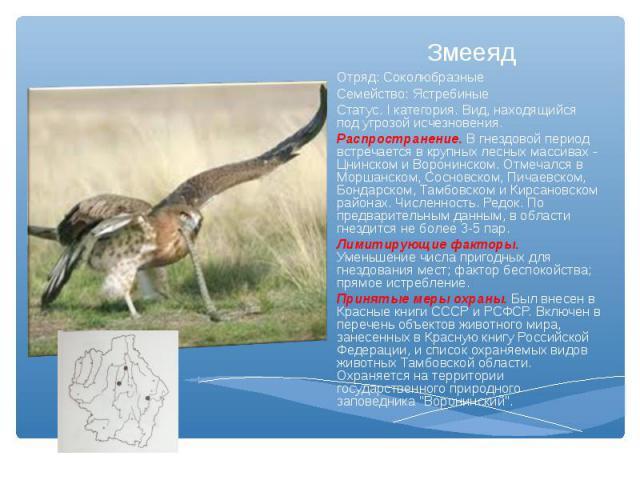 Отряд: Соколюбразные Семейство: ЯстребиныеСтатус. I категория. Вид, находящийся под угрозой исчезновения.Распространение. В гнездовой период встречается в крупных лесных массивах - Цнинском и Воронинском. Отмечался в Моршанском, Сосновском, Пичаевск…