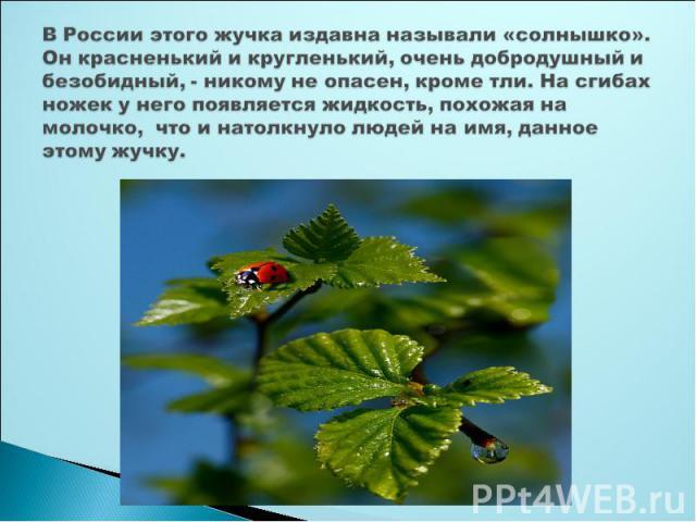 В России этого жучка издавна называли «солнышко». Он красненький и кругленький, очень добродушный и безобидный, - никому не опасен, кроме тли. На сгибах ножек у него появляется жидкость, похожая на молочко, что и натолкнуло людей на имя, данное этом…
