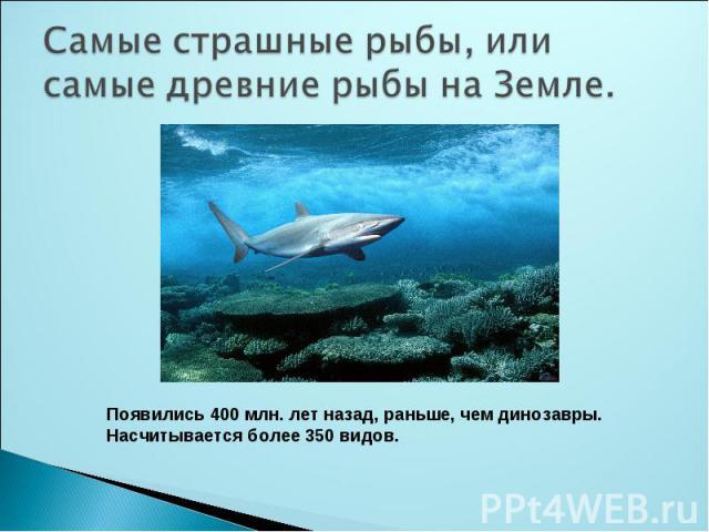 Самые страшные рыбы, или самые древние рыбы на Земле.Появились 400 млн. лет назад, раньше, чем динозавры.Насчитывается более 350 видов.