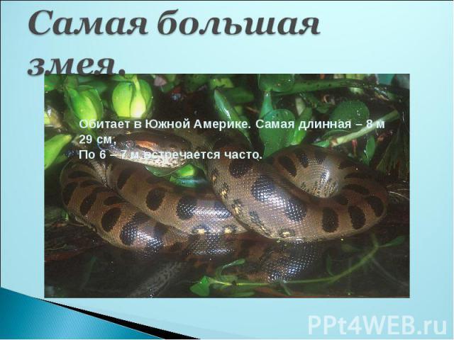 Самая большая змея.Обитает в Южной Америке. Самая длинная – 8 м 29 см,По 6 – 7 м встречается часто.