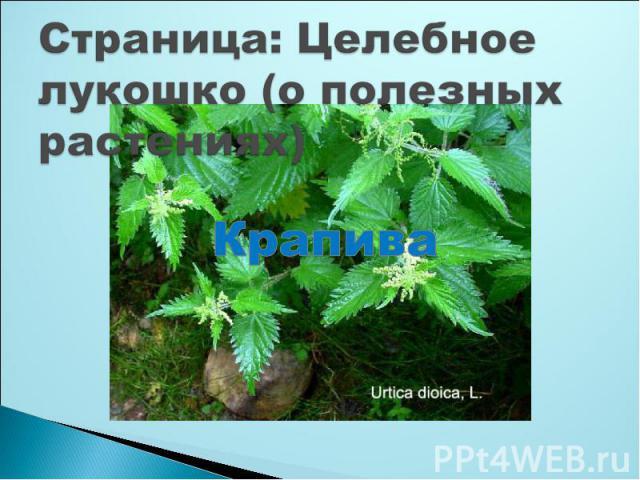 Страница: Целебное лукошко (о полезных растениях)