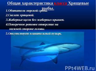 Общая характеристика класса Хрящевые рыбы.1.Обитатели морской среды.2.Скелет хря