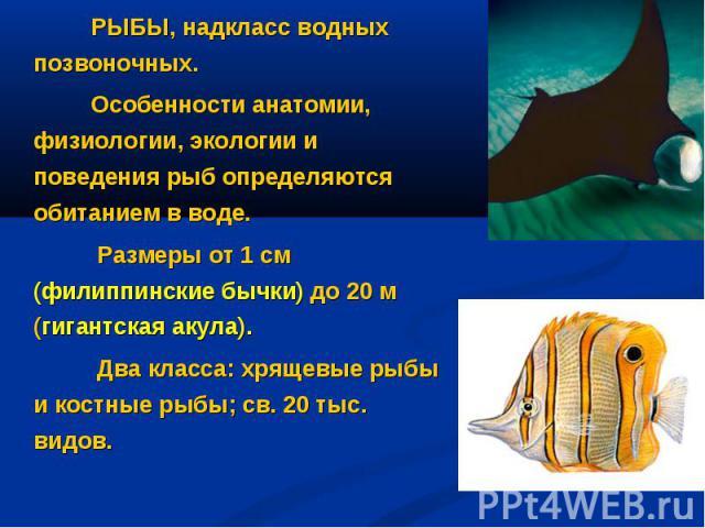 РЫБЫ, надкласс водных позвоночных. Особенности анатомии, физиологии, экологии и поведения рыб определяются обитанием в воде. Размеры от 1 см (филиппинские бычки) до 20 м (гигантская акула). Два класса: хрящевые рыбы и костные рыбы; св. 20 тыс. видов.