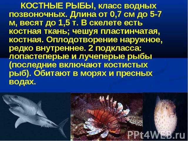 КОСТНЫЕ РЫБЫ, класс водных позвоночных. Длина от 0,7 см до 5-7 м, весят до 1,5 т. В скелете есть костная ткань; чешуя пластинчатая, костная. Оплодотворение наружное, редко внутреннее. 2 подкласса: лопастеперые и лучеперые рыбы (последние включают ко…