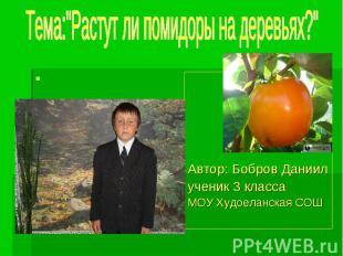 """Тема:""""Растут ли помидоры на деревьях?"""" Автор: Бобров Даниил ученик 3 классаМОУ Х"""