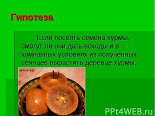 Гипотеза Если посеять семена хурмы, смогут ли они дать всходы и в комнатных усло