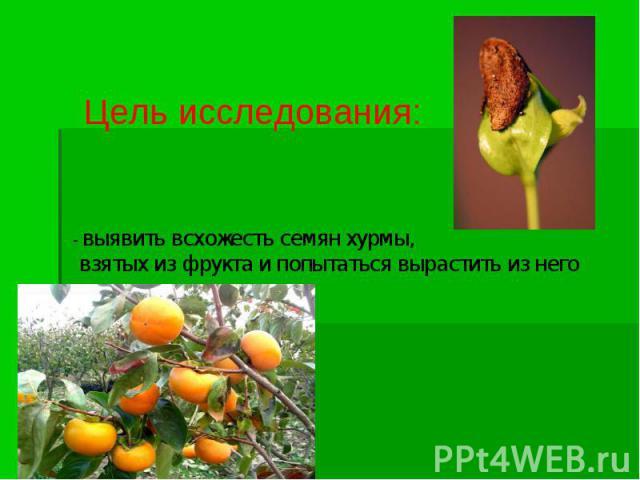 Цель исследования: - выявить всхожесть семян хурмы, взятых из фрукта и попытаться вырастить из него деревце