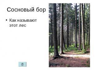 Сосновый борКак называют этот лес
