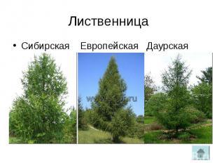 ЛиственницаСибирская Европейская Даурская