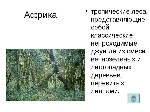 Африка тропические леса, представляющие собой классические непроходимые джунгли из смеси вечнозеленых и листопадных деревьев, перевитых лианами.
