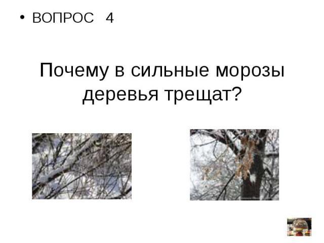ВОПРОС 4Почему в сильные морозы деревья трещат?