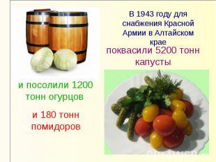 В 1943 году для снабжения Красной Армии в Алтайском краепоквасили 5200 тонн капу