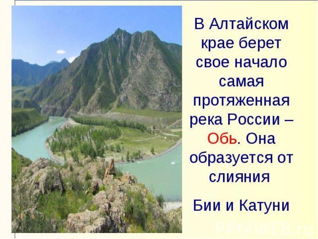 В Алтайском крае берет свое начало самая протяженная река России – Обь. Она образуется от слияния Бии и Катуни