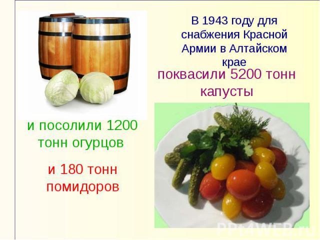 В 1943 году для снабжения Красной Армии в Алтайском краепоквасили 5200 тонн капустыи посолили 1200 тонн огурцов и 180 тонн помидоров