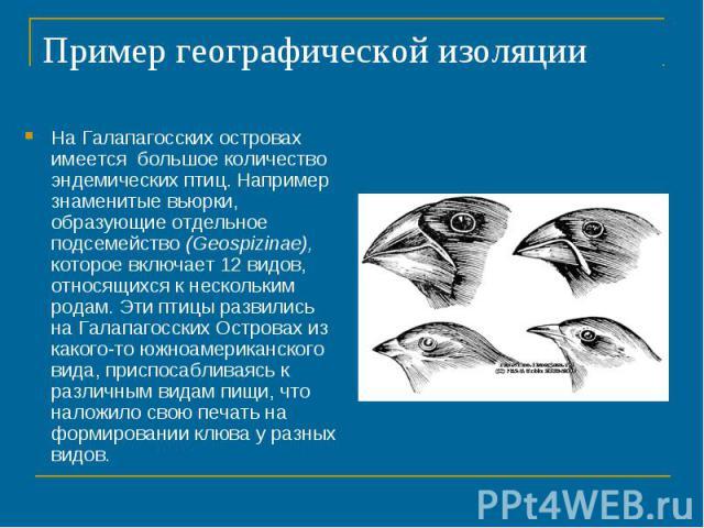 Пример географической изоляцииНа Галапагосских островах имеется большое количество эндемических птиц. Например знаменитые вьюрки, образующие отдельное подсемейство (Geospizinae), которое включает 12 видов, относящихся к нескольким родам. Эти птицы р…