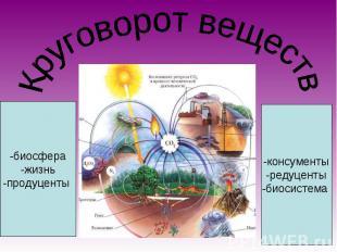 Круговорот веществ -биосфера-жизнь-продуценты -консументы-редуценты-биосистема