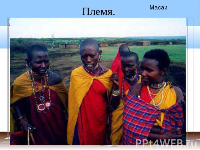 Племя. Масаи