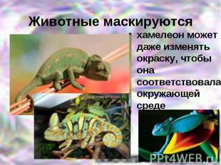 Животные маскируютсяхамелеон может даже изменять окраску, чтобы она соответствов