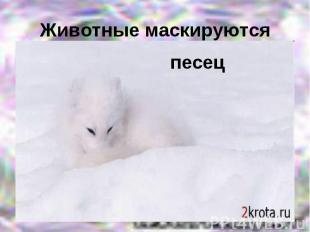 Животные маскируютсяпесец
