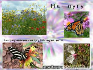 Н а л у г уНе сразу отличишь на лугу бабочку от цветка.