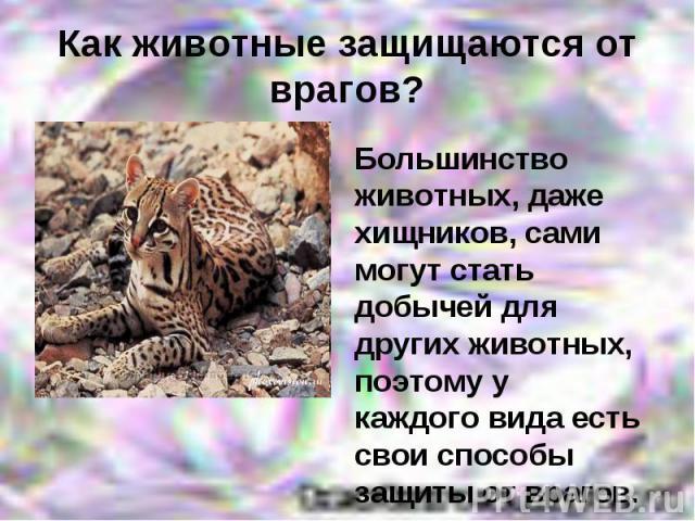 Как животные защищаются от врагов? Большинство животных, даже хищников, сами могут стать добычей для других животных, поэтому у каждого вида есть свои способы защиты от врагов.