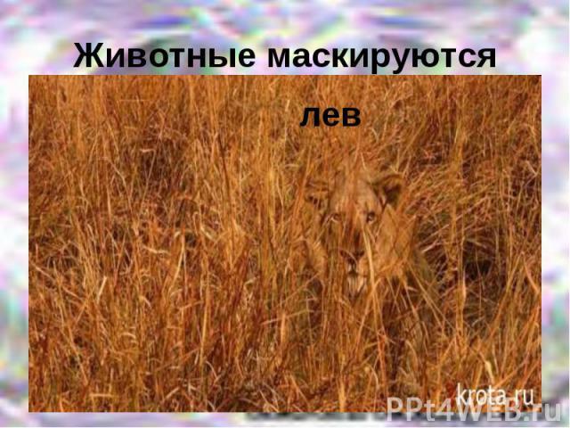 Животные маскируютсялев