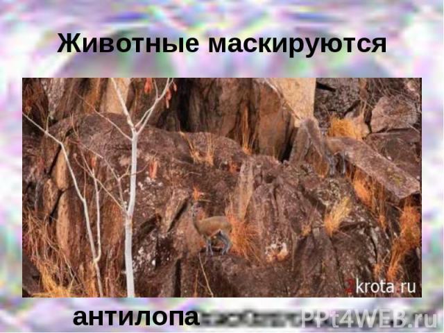 Животные маскируютсяантилопа
