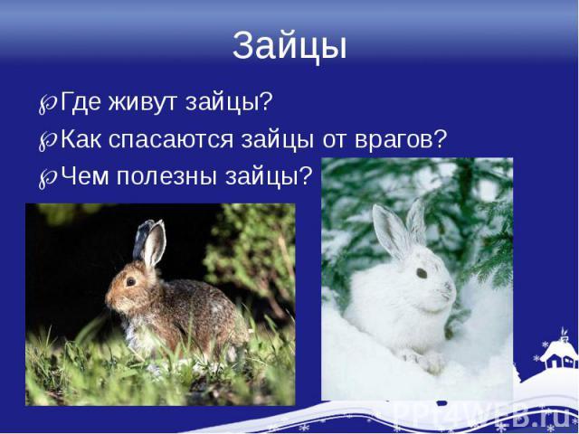 ЗайцыГде живут зайцы?Как спасаются зайцы от врагов?Чем полезны зайцы?