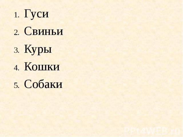 ГусиСвиньиКурыКошкиСобаки
