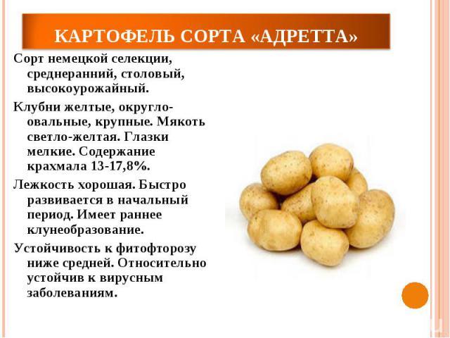 Картофель сорта «Адретта»Сорт немецкой селекции, среднеранний, столовый, высокоурожайный. Клубни желтые, округло-овальные, крупные. Мякоть светло-желтая. Глазки мелкие. Содержание крахмала 13-17,8%. Лежкость хорошая. Быстро развивается в начальный п…