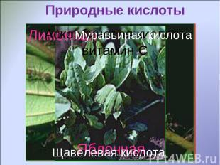 Природные кислотыМуравьиная кислотаЩавелевая кислота