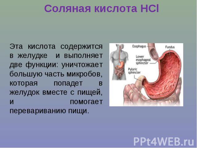 Соляная кислота НClЭта кислота содержится в желудке и выполняет две функции: уничтожает большую часть микробов, которая попадет в желудок вместе с пищей, и помогает перевариванию пищи.
