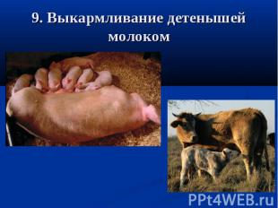9. Выкармливание детенышей молоком