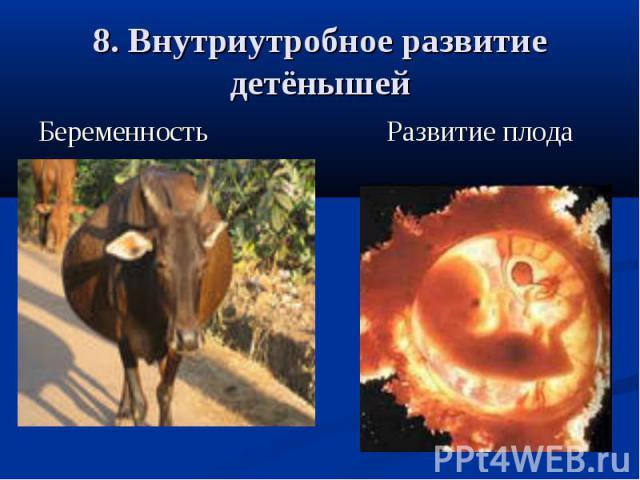 8. Внутриутробное развитие детёнышейБеременность Развитие плода