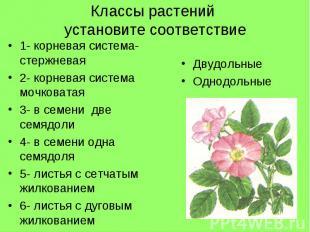 Классы растений установите соответствие1- корневая система- стержневая2- корнева