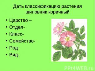 Дать классификацию растения шиповник коричныйЦарство –Отдел- Класс-Семейство- Ро