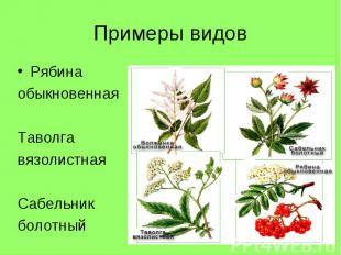 Примеры видовРябина обыкновеннаяТаволга вязолистнаяСабельник болотный